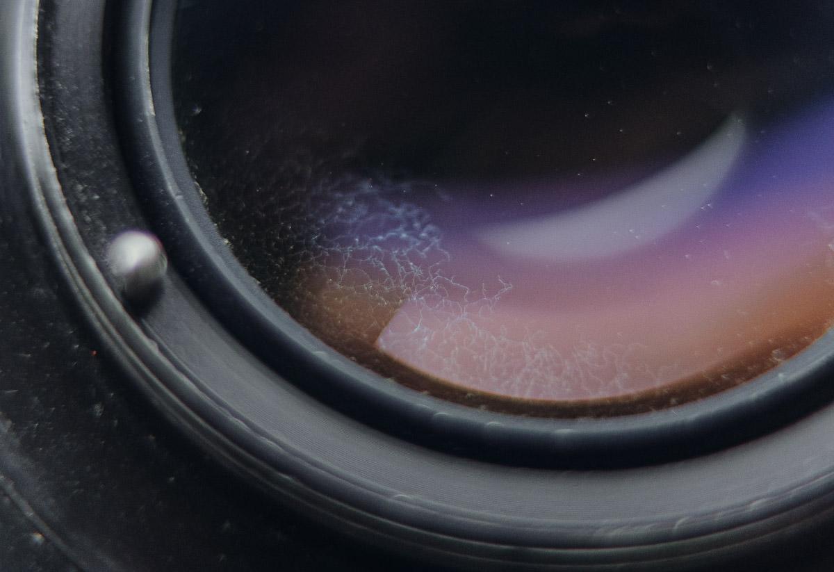 Objektiv Fungus im Glas